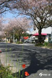 散りゆく桜の木の下で