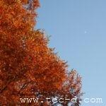 秋の米泉湖