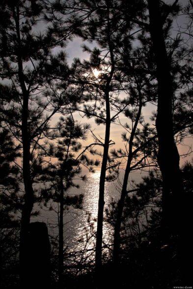 切り絵の森