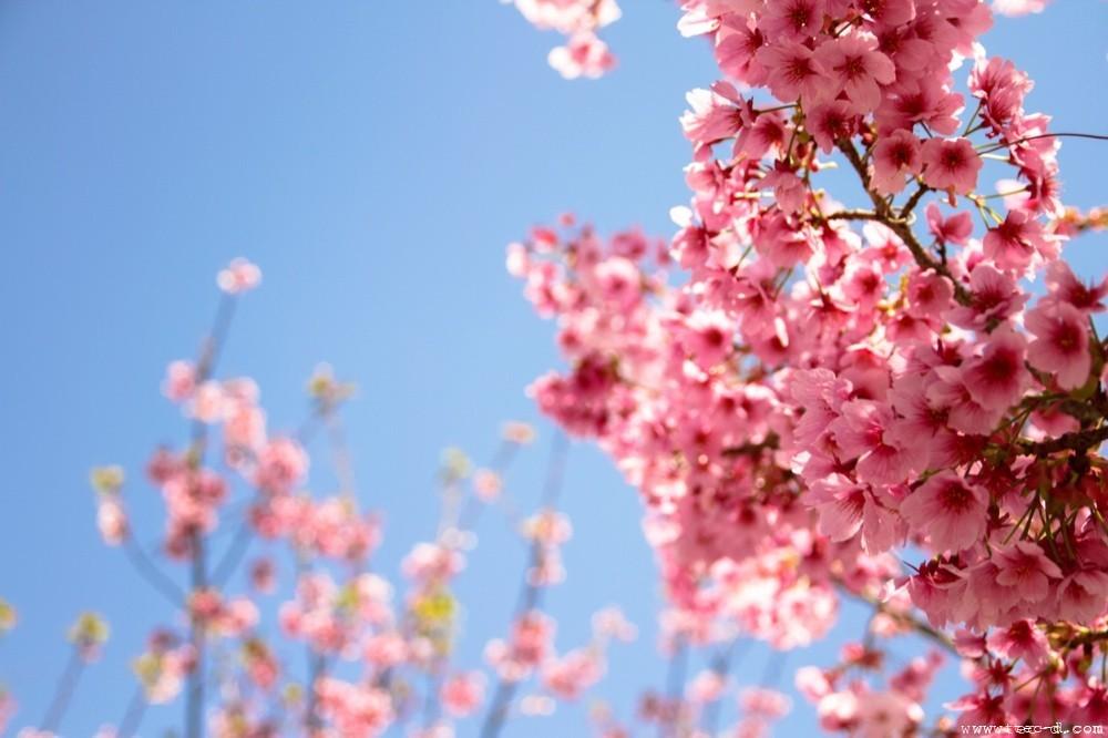 春色 TEC-Dのブログ