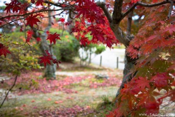 毛利庭園の紅葉②