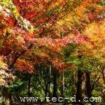 燃ゆる秋〜重源の里