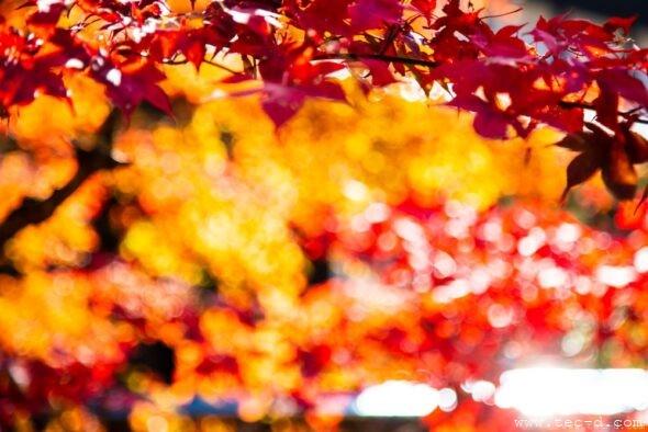 煌めきの秋〜重源の里