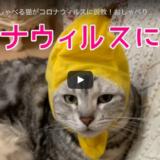 大阪弁をしゃべる猫がコロナウィルスに説教!?