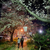 周南市東川緑地公園の夜桜③
