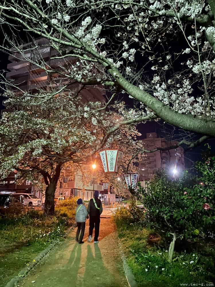 周南東川緑地公園の夜桜